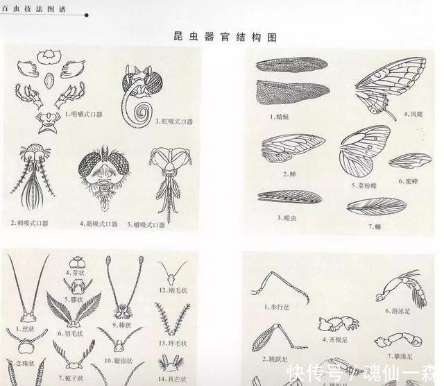 国画典藏——百虫技法图谱