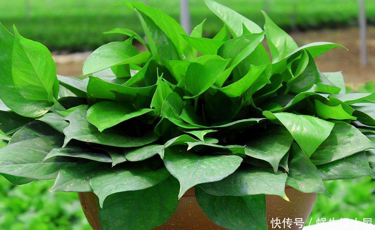 """养花小窍门:喂点这2样""""营养品"""",植物个个根壮叶绿"""