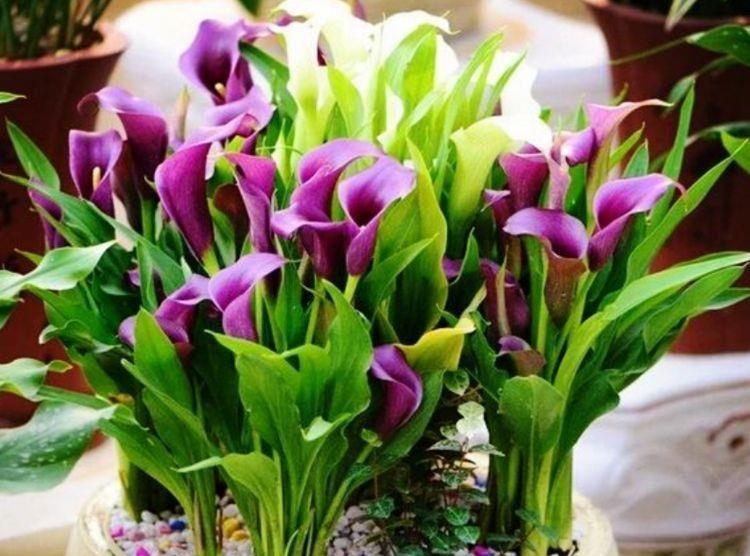 【草丁图书馆】4种花养家里,芳香令人愉悦,好养易活颜值高