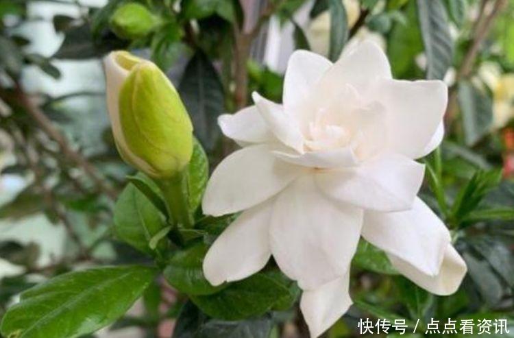 5种花适合夏天养,开花爆盆花期长,繁花似锦,花色美轮美奂