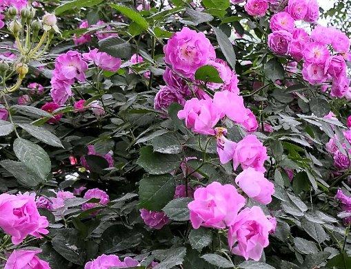 未來3個月,4屬相黴運散好運來,桃花朵朵開,生活蒸蒸日上