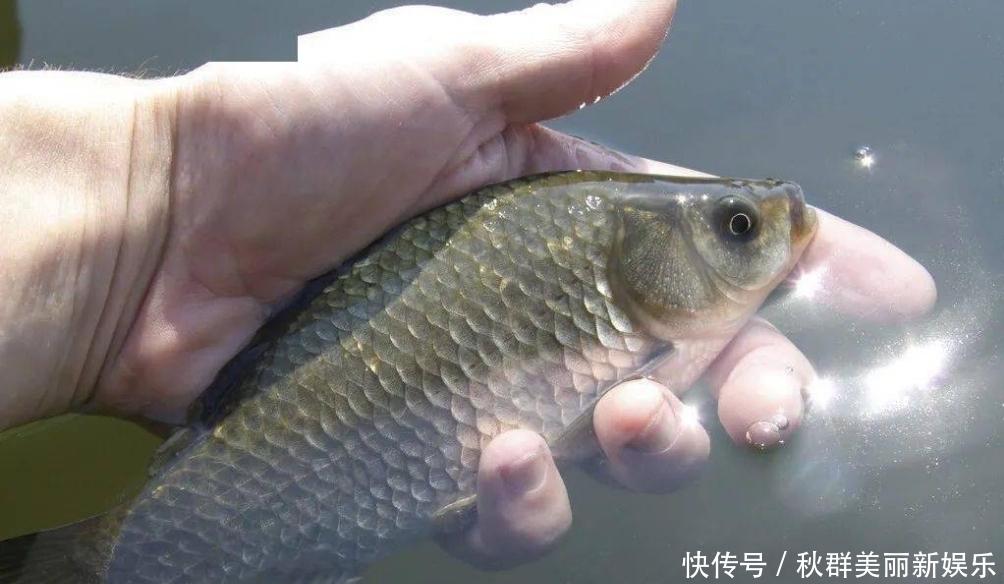 春天一到,鱼反而不好钓?按我说的这四点做,上鱼速度杠杠的。