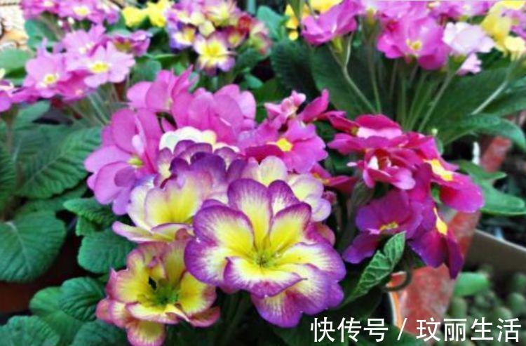 深圳+哪里有中国花卉苗木行业加工