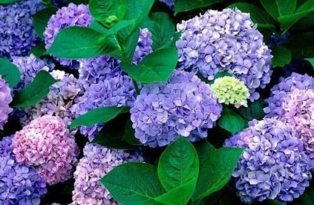 世上最美几种花,美不胜收,颜色丰富多彩,养在客厅美极了