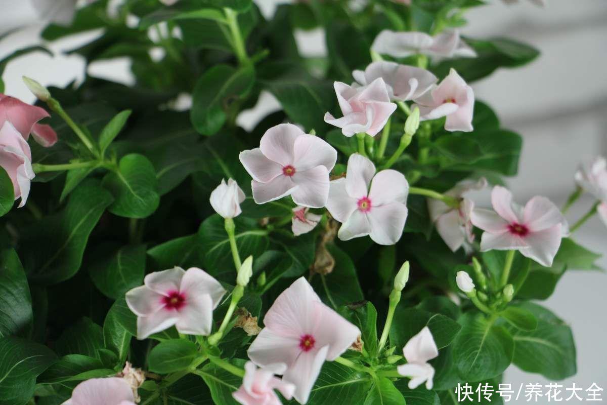 这5种花,是真正的开花机器,家里养一盆,一年四季都呼呼开花