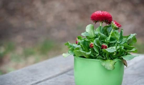 爆盆|教你一招,不仅能让你的花草远离黄叶和虫害,还能爆盆!