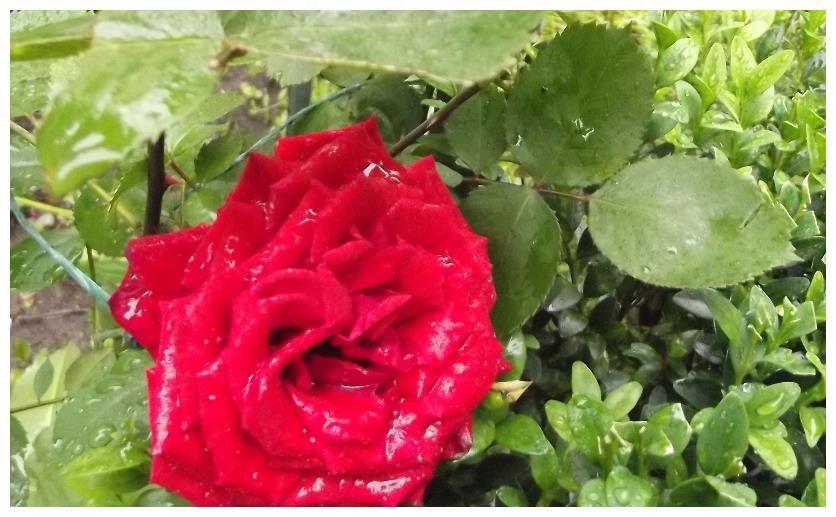 5月,鐵樹開花,愛情回頭,不負再見,3生肖激動萬分,俘獲舊情人