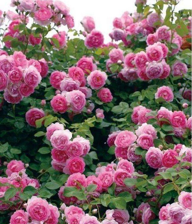 4种花超漂亮,花朵迷人,阵阵花香,花朵大