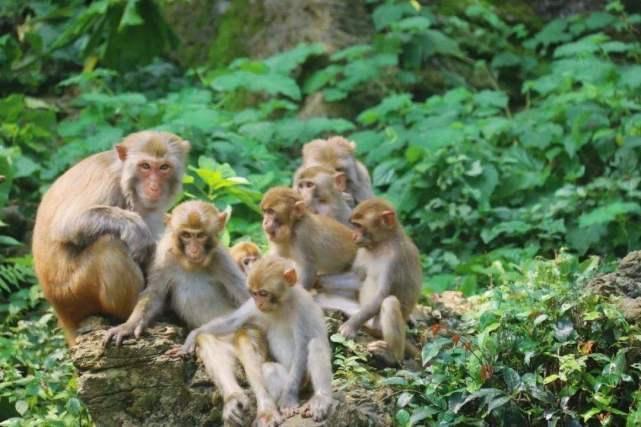 景区游玩 猴子失控 谁来保护我们的安全?