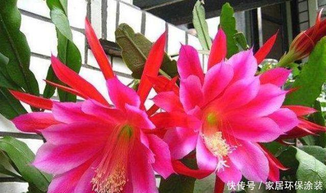 4种花开花最灿烂,谁见了都喜欢,花朵漂亮,花开旺