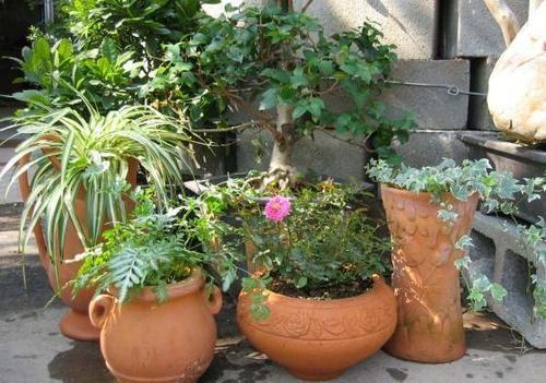 新手养花,上盆注意这些细节,植株才能服盆快、长得好