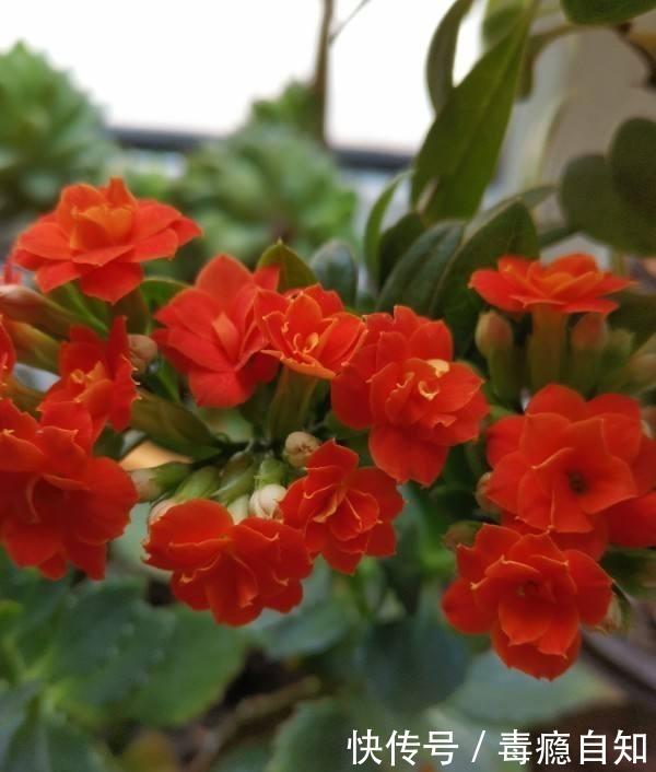 在家养6种花,越冷越开花,冬天也有花赏!