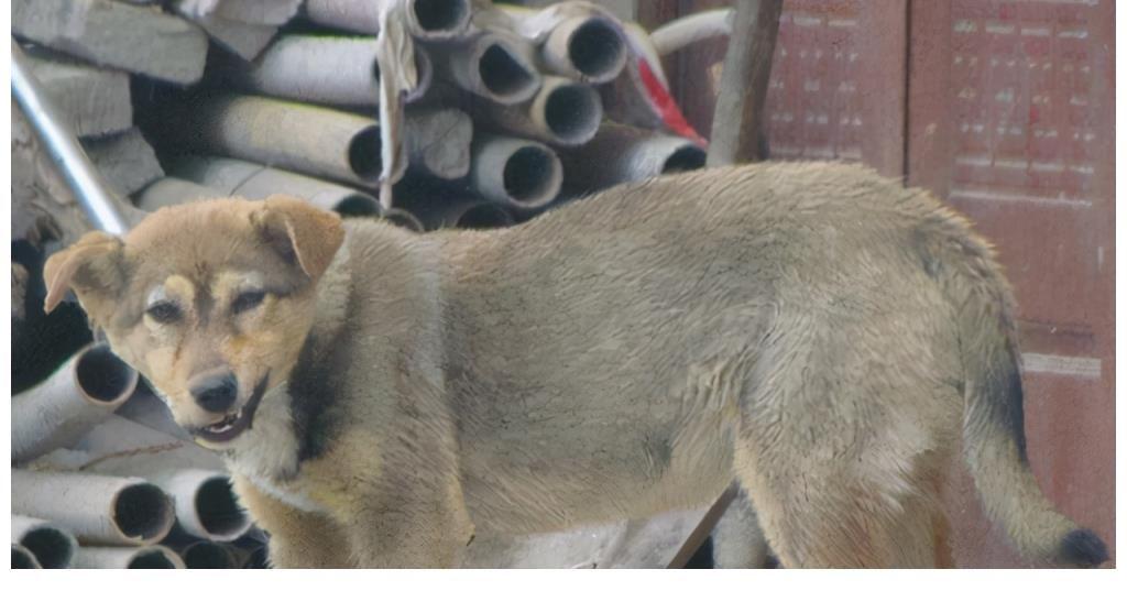 程鹏|他杀人,狗吃人,93年参演电影《老人与狗》,拍完后人狗皆被处死
