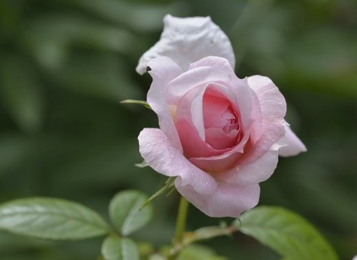 3月下旬開始,紫氣東來,4屬相喜逢貴人,桃花旺盛,財旺事業旺