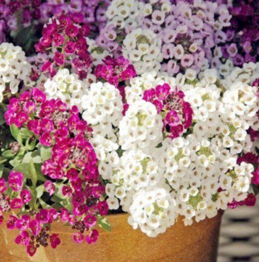 阳台必养此款花卉,净化空气的能力超强,特别的养人