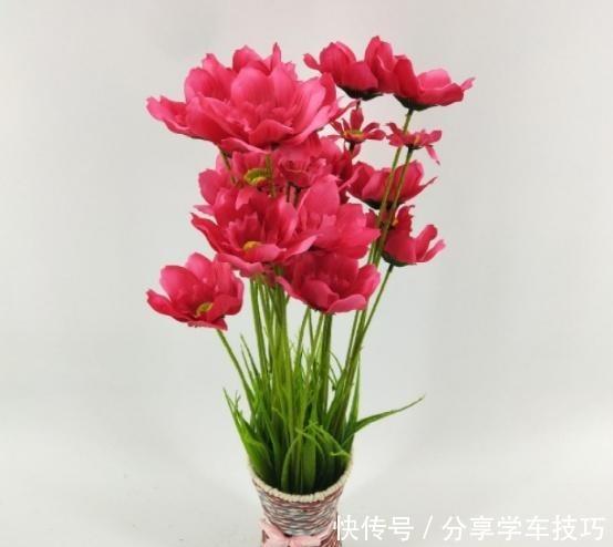 家里最好别养这几种花,对住里面的人很不友好,别一错再错了!