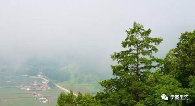 晨雾中的大兴安岭,美丽美景美如画……