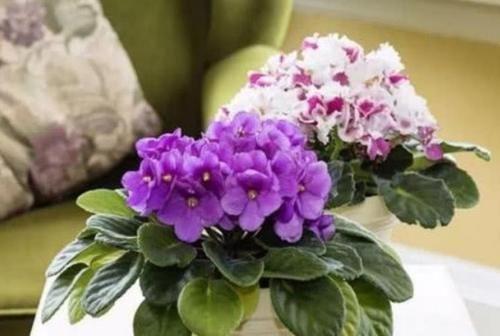 【草丁图书馆】超漂亮的4种花,浇点水就狂开花,开成花海美极了