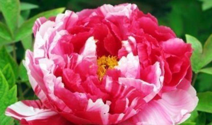 阳台养上4种花,阳台美成花园,漂亮花朵,开的最灿烂