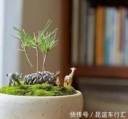 """3种植物,就像净化器一样,能""""净化空气"""",效果很好"""