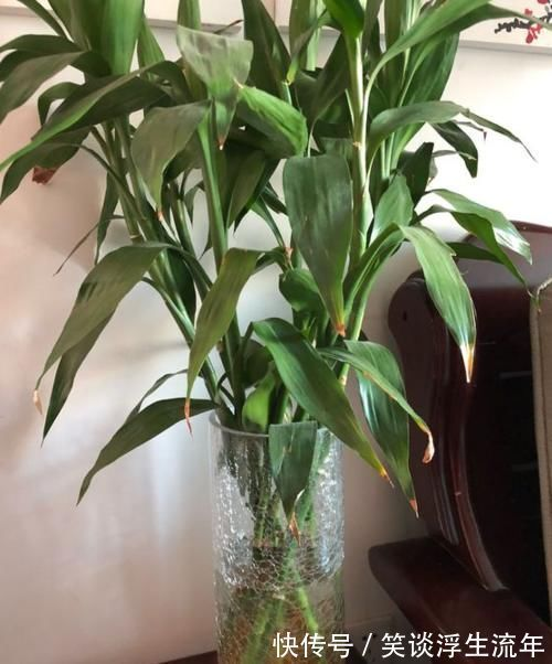 花儿|家中无法养这三类绿植,白送都不要,危害很大不建议养