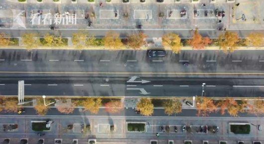 上海新增14条绿化特色道路 超额完成十三五规划