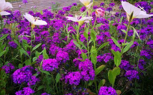 4种花很耐养,沾土就能活,好养易爆盆,颜值超高的