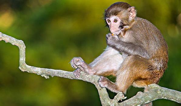 屬猴人的最佳配偶,不離婚就註定大富大貴,兒孫滿堂幸福一輩子!