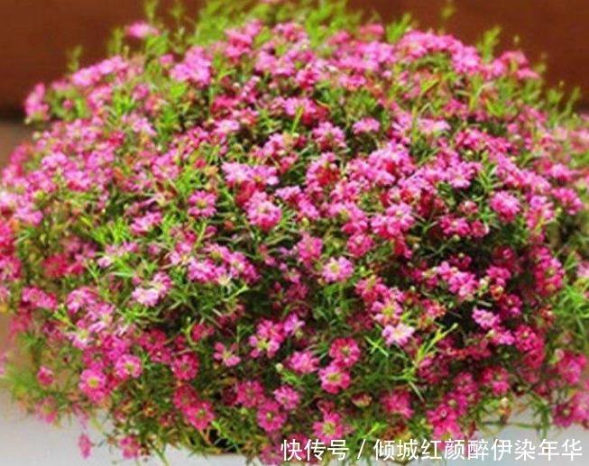"""""""5种花""""是爆盆能手,好养易活,直接开成""""花海"""",太美了!"""