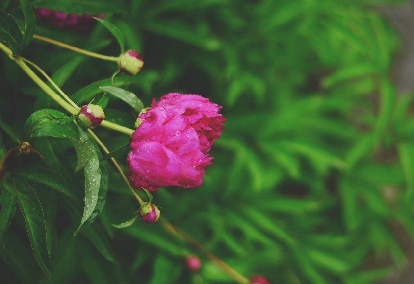 5月,天降桃花,姻緣駕臨,好運登門,3生肖破鏡重圓,愛情繾綣