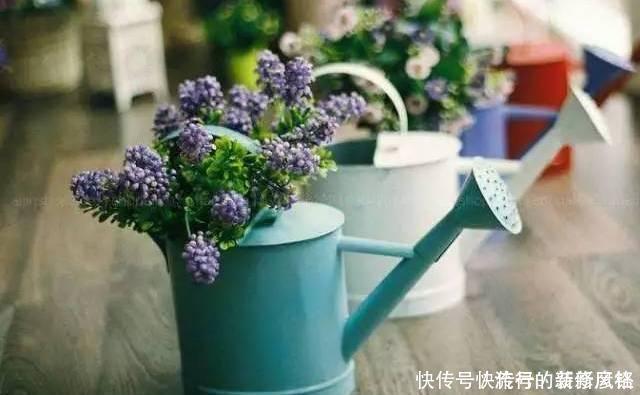 5个养花小技巧,既简单又实用,不愁学不会养好花