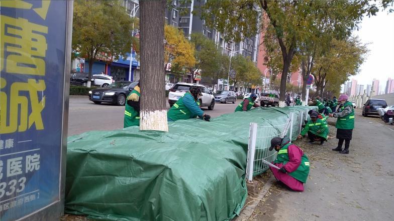 【文明播报】丰润区住建局:冬季绿化四步走  守护来年绿荫浓