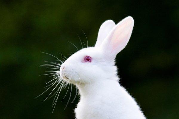 """属兔人和3个生肖配对,简直就是""""皇帝命"""",2021年一路顺风顺水"""