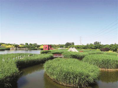 """临港湿地公园:""""环保""""""""颜值""""兼容并蓄"""