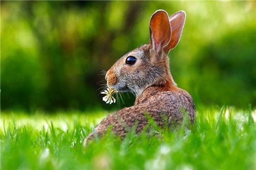 2021年最旺屬兔人的3生肖,能給屬兔人帶來好運,生肖兔遇到要珍惜