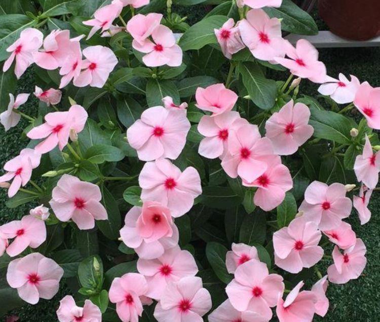 适合冬天养护的4种花,花好看名字也好听,颜值超高的