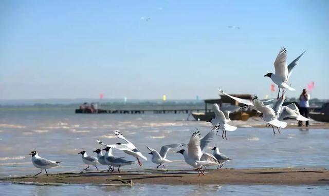 中国最大的沙漠湖泊,有七条河流注入,是当地最大的内陆湖