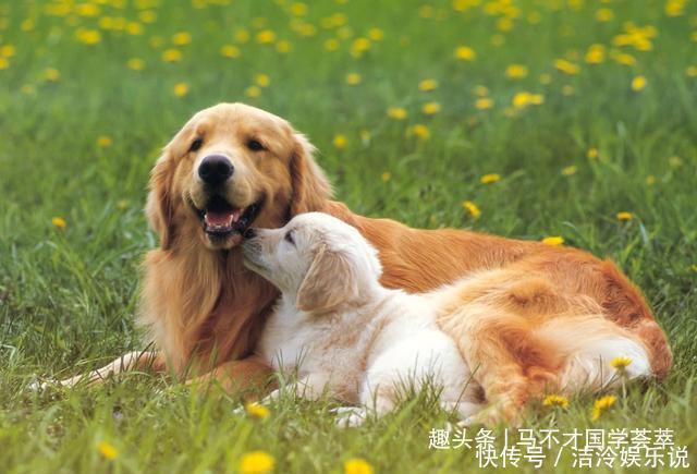 2021年屬狗人的生肖密碼屬狗人在牛年要註意什麼