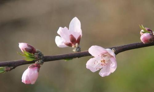 悲春伤秋 白居易一首桃花诗,表面上写花,实际上讲自己,读一次心疼一次