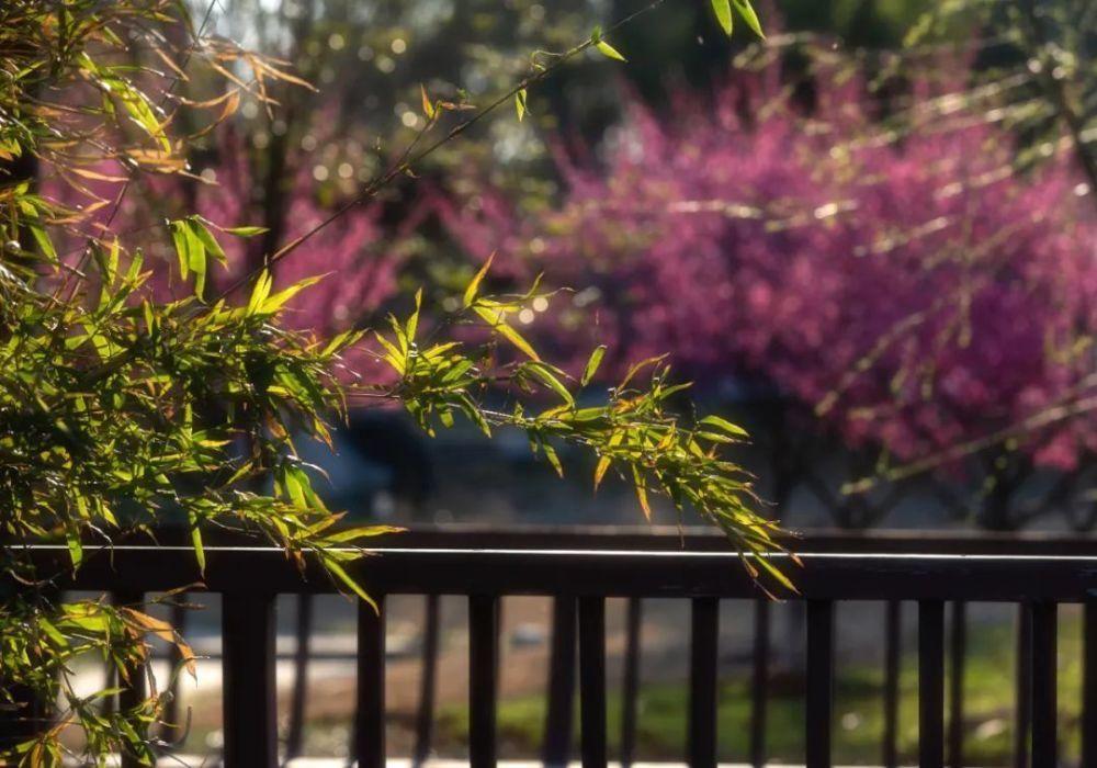 春天里,去杏花村文化旅游区赏花吧!后附杏花花期预测~