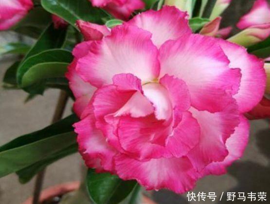 7月就养3种花,耐热又耐旱,懒人新手都能养得好,开花不断