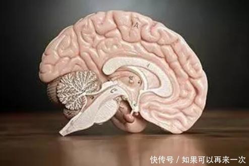 【草丁图书馆】关于小脑萎缩的治疗