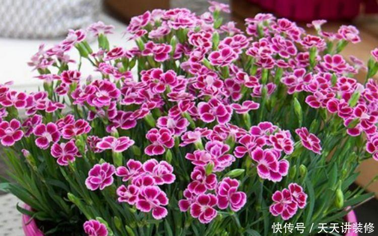 养花就养4种花,家里养一盆,花形别致,散发芳香,你养了吗?