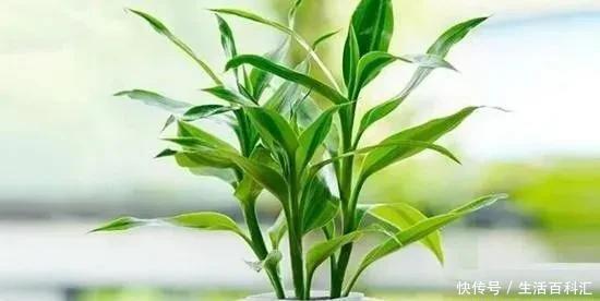 """7种爱""""喝醋""""的花草,浇水时加点""""醋"""",根壮叶绿、不怕黄叶"""