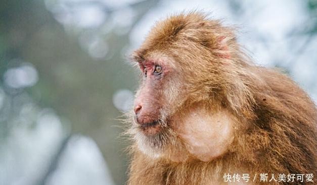不出一周,生肖属猴人会遇见下面1个人,是你命中最大的贵人!