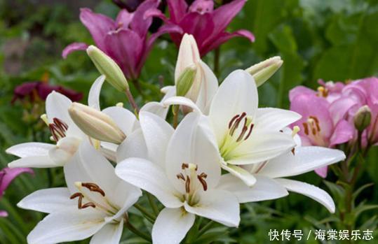 卧室養花不了解這些,隨意盆栽可能會引發失眠、沒精神、一身病