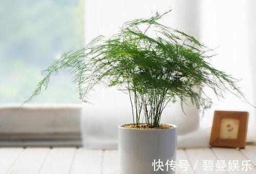 绿色植物|家里万万要养这几种植物,难怪家人身体越住越健康,后悔才察觉