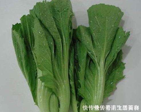【草丁图书馆】解毒消肿、明目通便的芥菜,菜农种植前需全面了解的几个重要事项