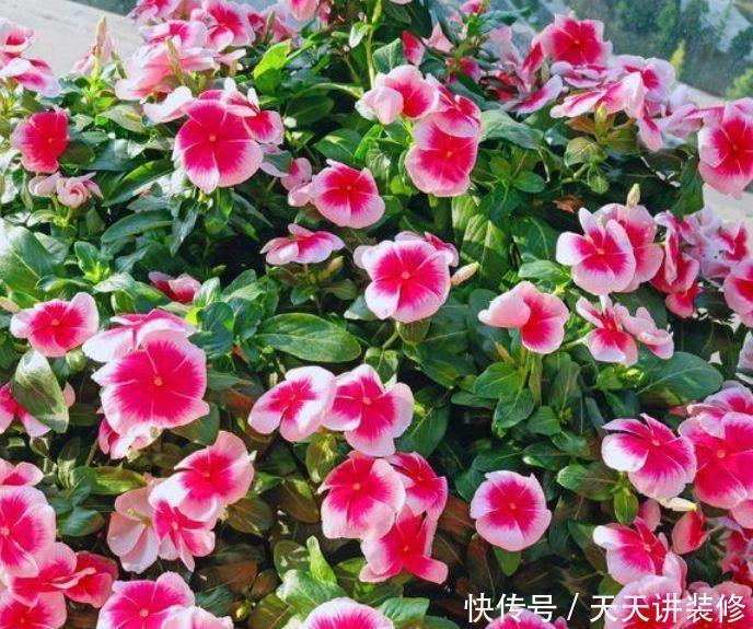 颜值超高|颜值超高的几种花卉,个个美的出奇,绚丽多彩