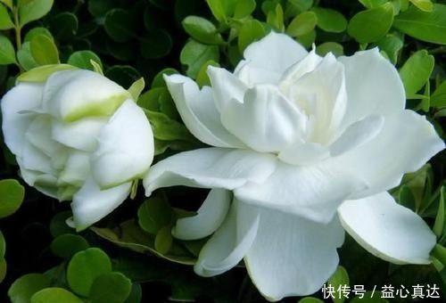 公认不好养的3种花,大部分花友表示养不满1年,你养过几种
